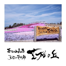 <h5>2008 – Cherry Blossom Hill – Mount Chauseyama Plateau – Toyone Village Tourism Association</h5><p>																																																			</p>
